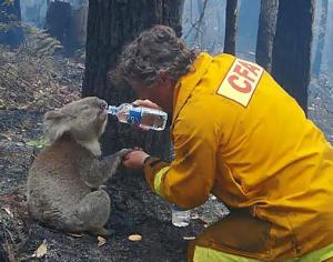 The image that launched a worldwide bushfire appeal. I can imagine a mad rush of foreign tourists visiting Australia in the aftermath of the fire.